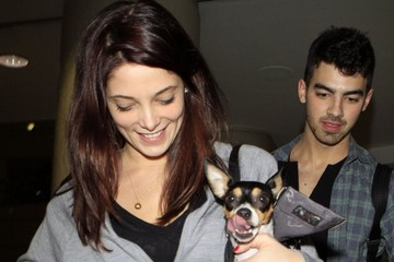 Joe Jonas Ashley Greene File: Remembering Ashley Greene's Box Terrier
