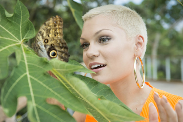 Jessie J Buzzcut [handout photo,butterfly,cynthia subgenus,adaptation,organism,leaf,wildlife,insect,moths and butterflies,plant,fawn,jessie j,the eden project ahead of her performance,performance,england,st. austell,the eden project,the eden sessions]