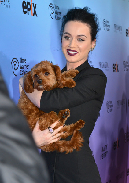 Katy Perry Statement Ring [katy perry: the prismatic world tour,dog,canidae,dog breed,companion dog,fur,carnivore,puppy,puppy love,katy perry,butters,ace hotel,the theater,california,time warner cable,epix,epix world premier screening,time warner cable world premier screening]