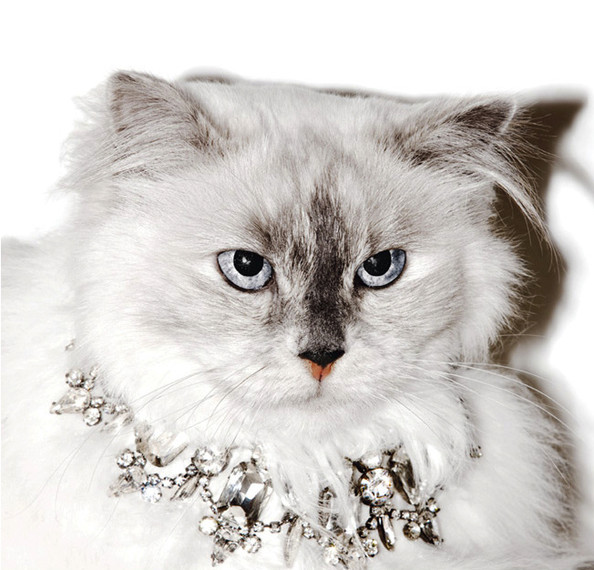 Cats Model Juicy Couture's Holiday Jewelry