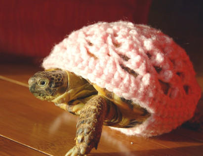 May We Interest You In Some Tortoise Sweaters?