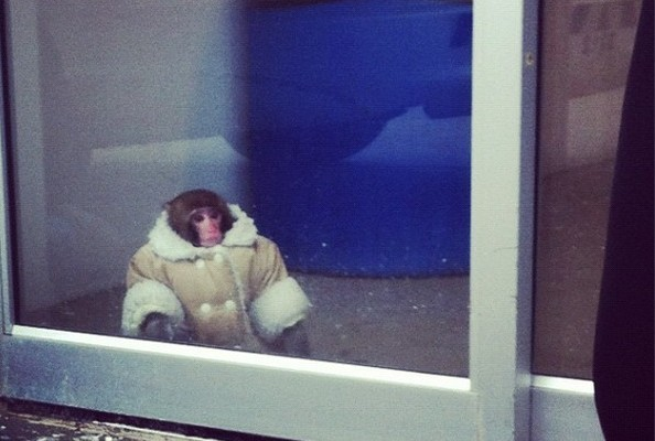 10 Cute Winter Outfits for Your Monkey (or Other Animal)