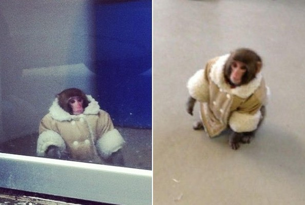 Roberto Cavalli Had a Pet Monkey Once, But It Was 'Mean'