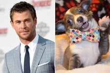 What Would You Rather: Hot Guys vs. Baby Animals