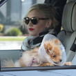 Gwen Stefani, Her Cute Dog, and Her Gorgeous Family go to the Gas Station