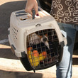 Ashley Greene Dog Carrier Crate