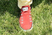 Drake Bell Canvas Sneakers